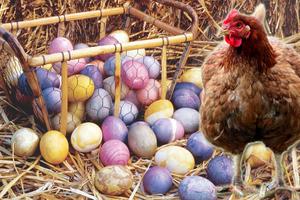 Τριάντα κότες γεννούν αυγά σε... διάφορα χρώματα