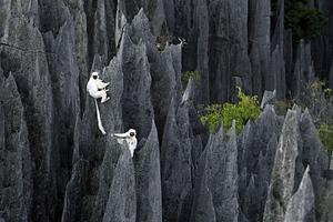 Το μεγαλύτερο «πέτρινο δάσος» του κόσμου!