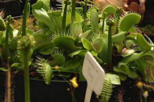 Σαρκοφάγα φυτά