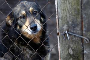 Πώς να καταγγείλετε κακοποίηση ζώων