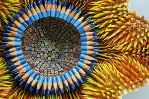 Έργα τέχνης με… μολύβια