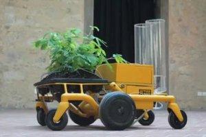 Φυτά με ρόδες τρέχουν για να προστατευτούν