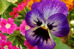 Τι συμβολίζουν τα λουλούδια;