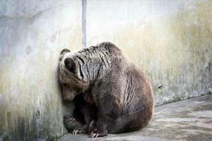 «Ένα... στρέμμα φυλακής για αρκούδες και λύκους»