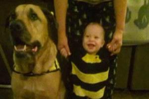 Σκύλος έφαγε μωρό την ημέρα των γενεθλίων του