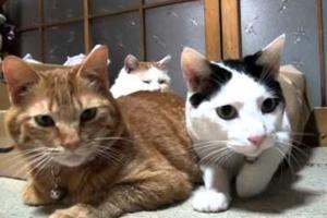 Η οικονομική κρίση προκαλεί επιδημία αδέσποτων γατιών