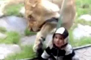 «Πεινασμένη» έμεινε η λέαινα