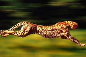 Η ταχύτητα των ζώων εξαρτάται από το μέγεθος;