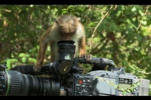 Μαϊμούδες καμεραμάν