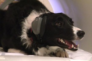 Αδέσποτος σκύλος βοήθησε στην εξάρθρωση συμμορίας