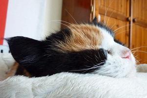Αυτοκτόνησε μετά το θάνατο της γάτας του