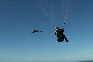Πετώντας μαζί με τα γεράκια