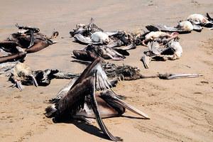 Οι μυστηριώδεις θάνατοι πτηνών και δελφινιών σε εικόνες