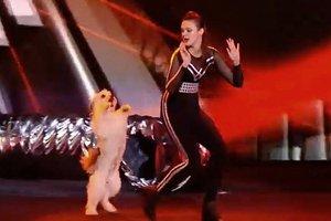 Σκύλος, ο μεγάλος νικητής του Βρετανία έχεις ταλέντο