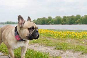 Eντοπίστε το σκύλο σας μέσω GPS