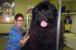 Φωτογραφίες από τα μεγαλύτερα σκυλιά στο κόσμο