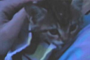 Πυροσβέστης κατέβηκε 30 μέτρα για να σώσει γατάκι