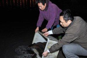 Εκατομμύρια ζώα σκοτώνονται σε θρησκευτικές τελετές στην Ταϊβάν