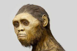 Ο homo erectus ήταν ο πρώτος που μίλησε και ήταν ναυτικός που έφτασε ως την Κρήτη