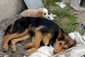 Ψάχνουν τον βοσκό που πυροβόλησε σκύλο στο Βενεράτο