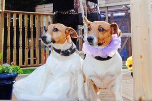 Γαμήλιες τελετές για… ζώα!