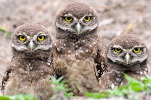 Απελευθερώθηκαν τέσσερις μικρές κουκουβάγιες