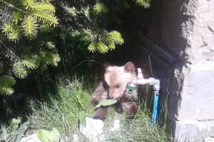 Τυχερό στην ατυχία του μικρό αρκουδάκι