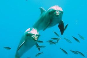 Οι ψαράδες στη Γαλλία σέβονται τα δελφίνια και το δείχνουν