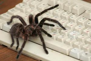 Οι αράχνες ζουν καλύτερα στις πόλεις