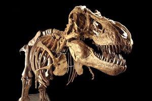 Έκθεση παλαιοντολογίας αξίας 85 εκατ. δολαρίων στο Χιούστον