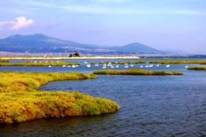 Εξέδρα αναπαραγωγής πτηνών στον ποταμό Γαλλικό