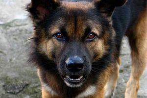 Ο αντιδήμαρχος απείλησε ότι θα... «αμολήσει σκύλο»