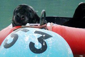 Όταν ο Σάμυ εντόπισε τη βάρκα
