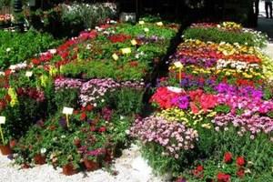«Ανθίζουν» οι ελληνικές εξαγωγές λουλουδιών
