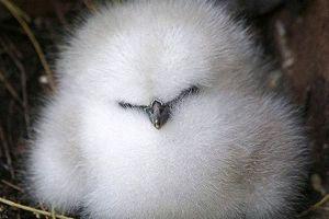 Τα πιο παχουλά πτηνά του κόσμου