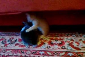 Το γατάκι και το κουνέλι