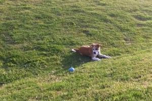 Κρέμασαν σκύλο στο Πόρτο Χέλι