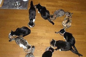Χιλιάδες γάτες εισήχθησαν στο Βιετνάμ για να… καταναλωθούν