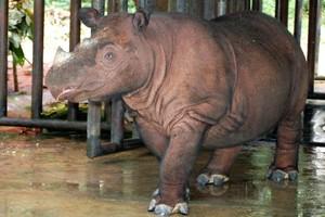 Το ταξίδι πέντε ρινόκερων από ζωολογικό πάρκο της Τσεχίας σε εθνικό πάρκο στη Ρουάντα