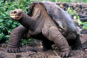 Η απίθανη κλοπή των χελωνών-σύμβολο από τα νησιά Γκαλαπάγκος