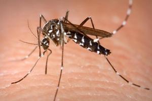 Εγκύκλιος οδηγιών για την πρόληψη μόλυνσης από τον ιό του Δυτικού Νείλου