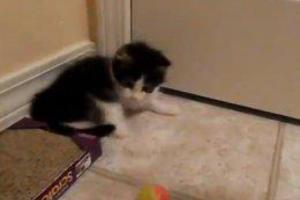 Ο γάτος που δίνει μαθήματα ζωής
