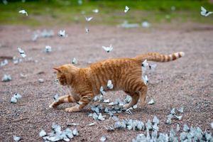 Παιχνίδι με τις πεταλούδες