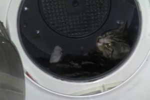 Έκλεισε τη γάτα του στο στεγνωτήριο ρούχων