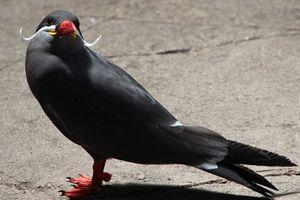 Και τα πτηνά αφήνουν μουστάκι!