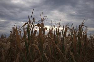 «Οι υψηλές θερμοκρασίες θα αποξηράνουν τα εδάφη και θα προκαλέσουν πυρκαγιές»