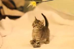 Μαθήματα ζωής από ένα γατάκι...