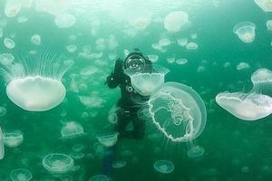 Κολυμπώντας ανάμεσα σε χιλιάδες… μέδουσες