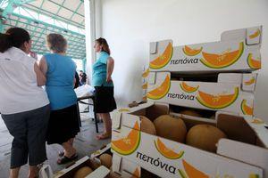 Μοιράζουν 15 τόνους πεπόνια στο δήμο Περιστερίου