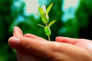 Βιοκαύσιμα από φύκια θα παράγει η Βραζιλία